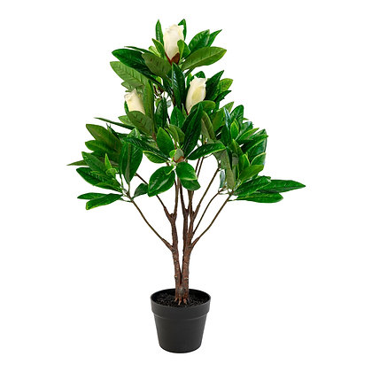 Magnoliatræ