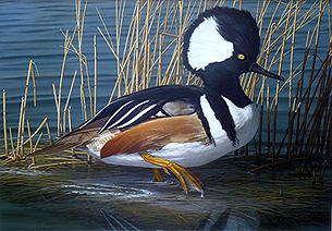 Hooded Merganser - MD Duck Stamp 2010