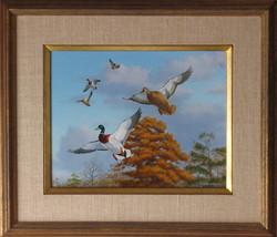 original_ducks_winging_autumn