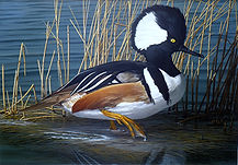 "Original Oil Painting, on Board, by David T. Turnbaugh - ""Marsh Dweller"" Hooded Merganzer, Maryland 2010 Duck Stamp Winner"
