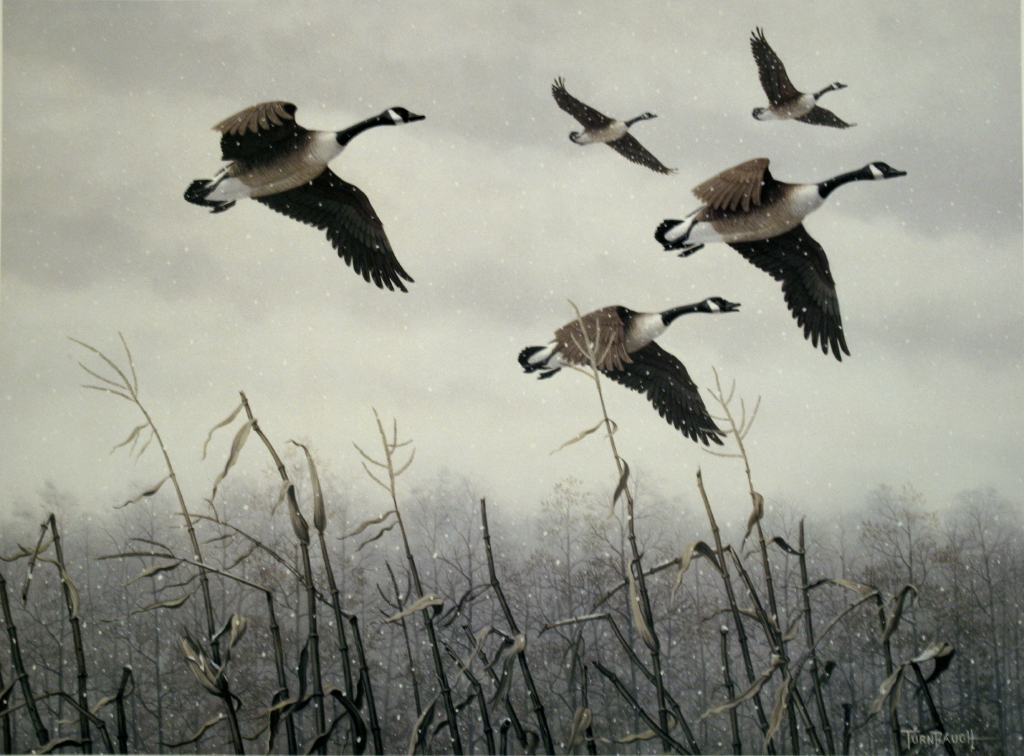 geese_January2