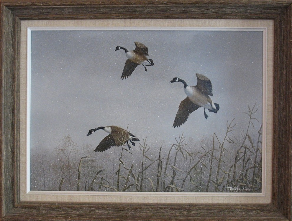 original_Canada-Geese-in-snow-over-cornstalks