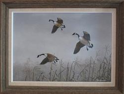 original_Canada-Geese-in-snow-over-cornstalks