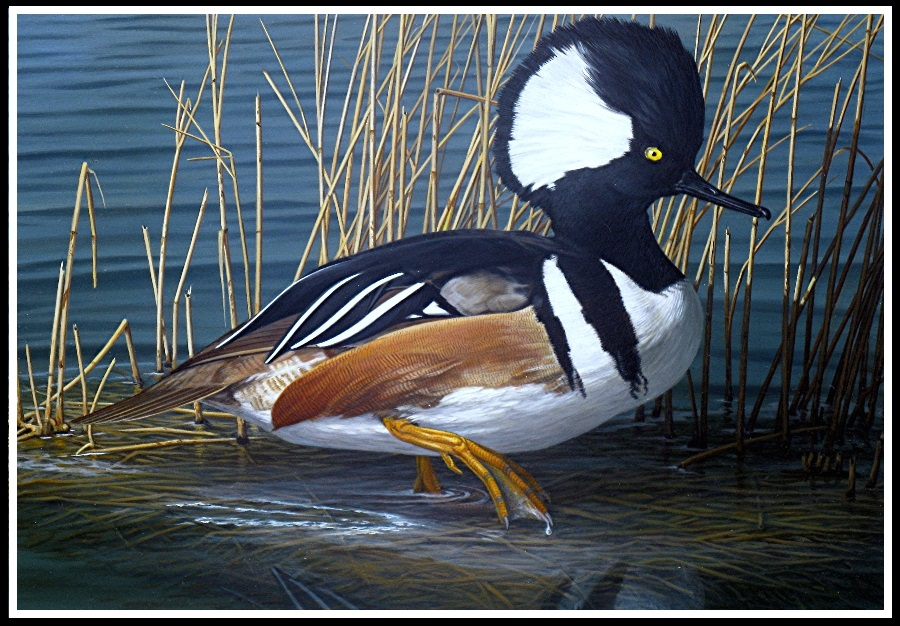 Merganzer-duckstamp2010-fineartamerica-framed