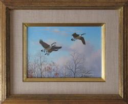 original_study-Canada-Geese
