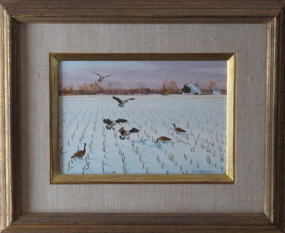 original_geese_snow-corn-Eastern-Shore