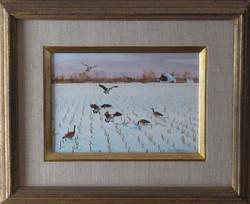 original_geese_snow-corn-Eastern-Shore