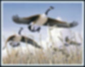 """On the Wing"" - Dave Turnbaugh's winner in the 2000 Maryland Migratory Game Bird Stamp Design Competition (""Duck Stamp"")"