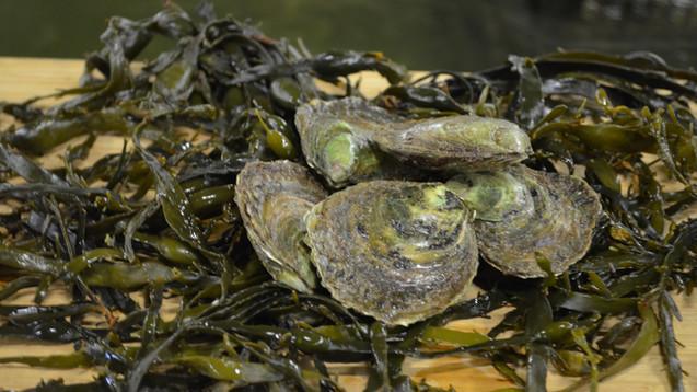 Platte oesters