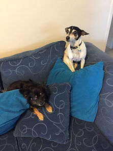 Boston and Piwi looking very mischief -