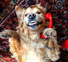 Dog%252520on%252520the%252520telephone_e