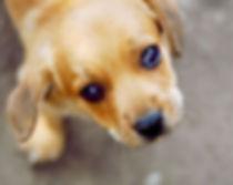 HTPPM - Puppy eyes.jpg