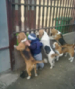 Dog Little boy and dogs all lined up at