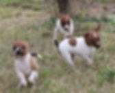 puppies playing.jpg