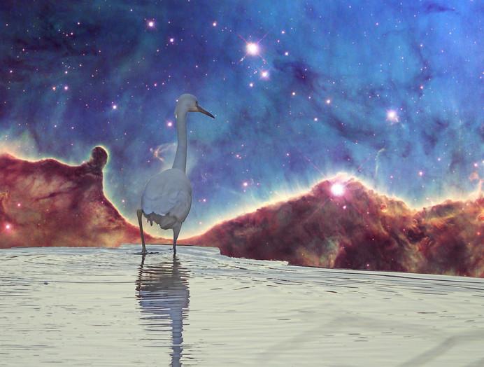 Space Egret Finds Edge of Nebula