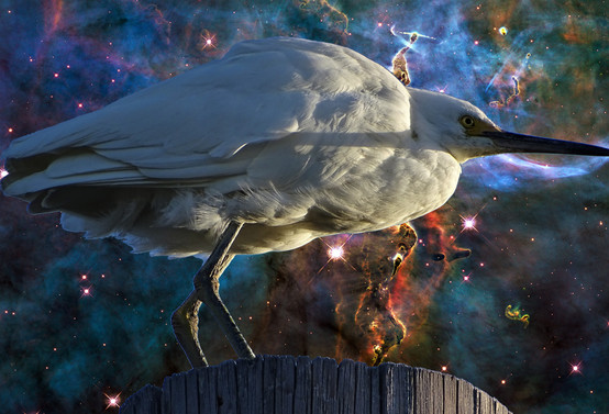Space Heron