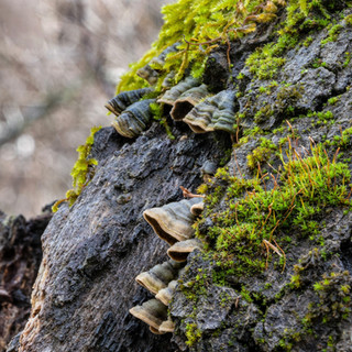 Turkey Tail Fungus and Moss