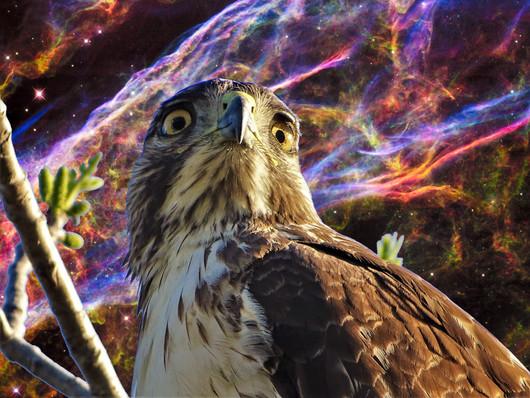 Star Hawk Fierce