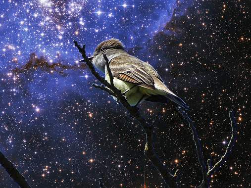 Wormhole Willow Fly Catcher