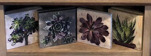 """Darren Gygi - """"Succulents"""" Gallery Wrapped Giclee Prints"""