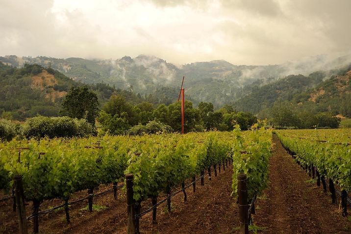 Zotovich Vineyards