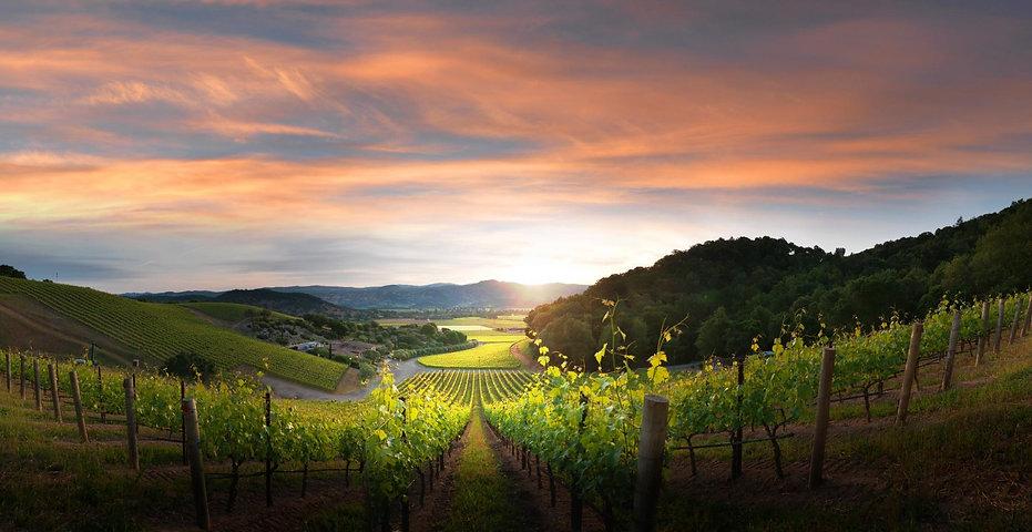 Blankiet vineyards.jpg