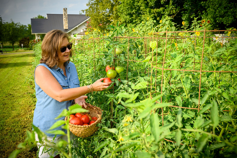 Sheree Rose Kelley pics fresh tomatoes from the vine
