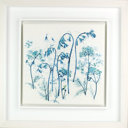 Bluebells and Cow Parsley