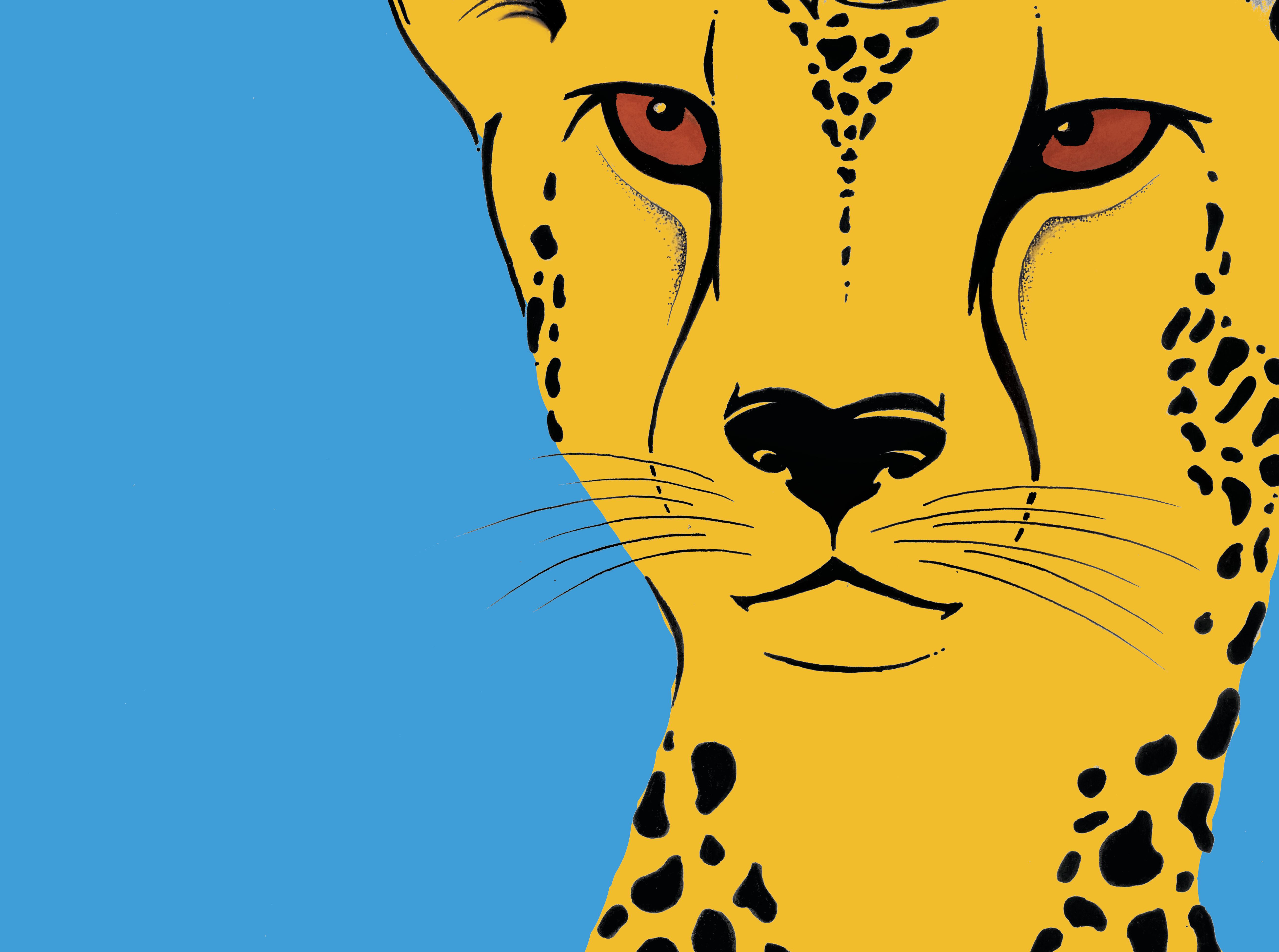 Cheetah face in colour