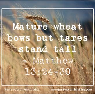 Wheat and Tares Matthew 13