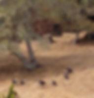 turkeysbehind.jpg