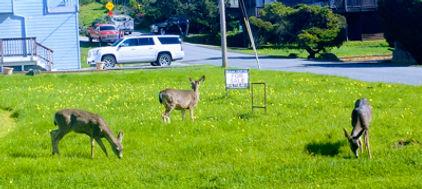 deer2019.jpg