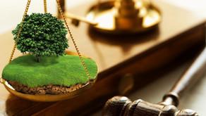 На Вінниччині безкарно орудує зграя земельних аферистів