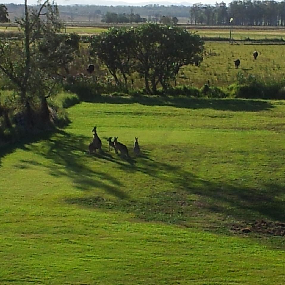 A few local visitors