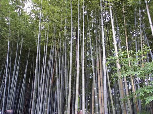 BambooForest2.JPG