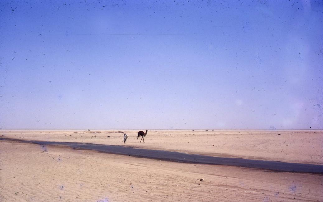The Gulf War Vet