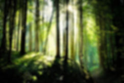 Kitchoo Zen Forest