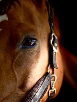 colour horse eye