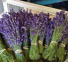 Freshly Harvested Lavender Bundles