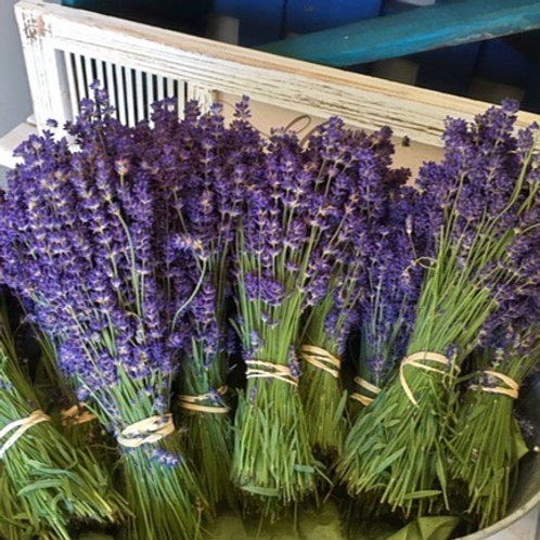 Freshly Harvested Lavender Bundles