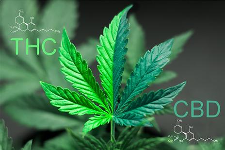 CBD vs THC.png
