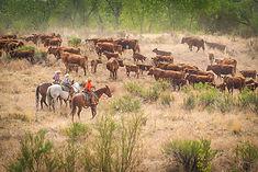 Beatty Canyon Ranch_0518-104.jpg