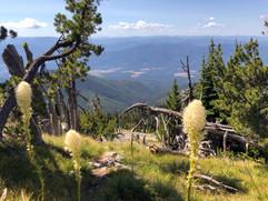 montana-outdoors-explore-wildflowers-hik