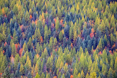 montana-outdoors-explore-autumn-fall-col