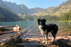 montana-outdoors-explore-dog-alpine-lake
