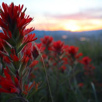 Montana Flowers