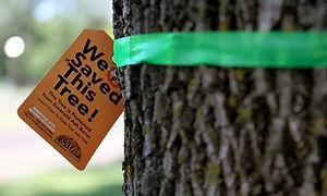 Tree Treatments