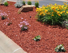 red mulch-3.jpg