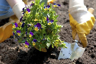 planting-flowers.jpg
