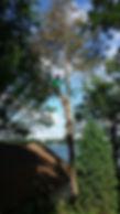 Tree Service, Tree Removal, Oconomowoc, Hartland, Delafield, Pewaukee, Waukesha